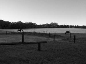 Hestefold i morgenstund | Fonden Team Golå