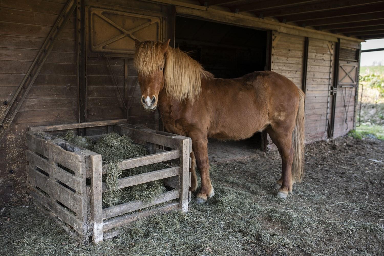 Bosted og opholdsted med heste   Fonden Team Golå